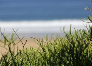 vegetation-dune-v2-833